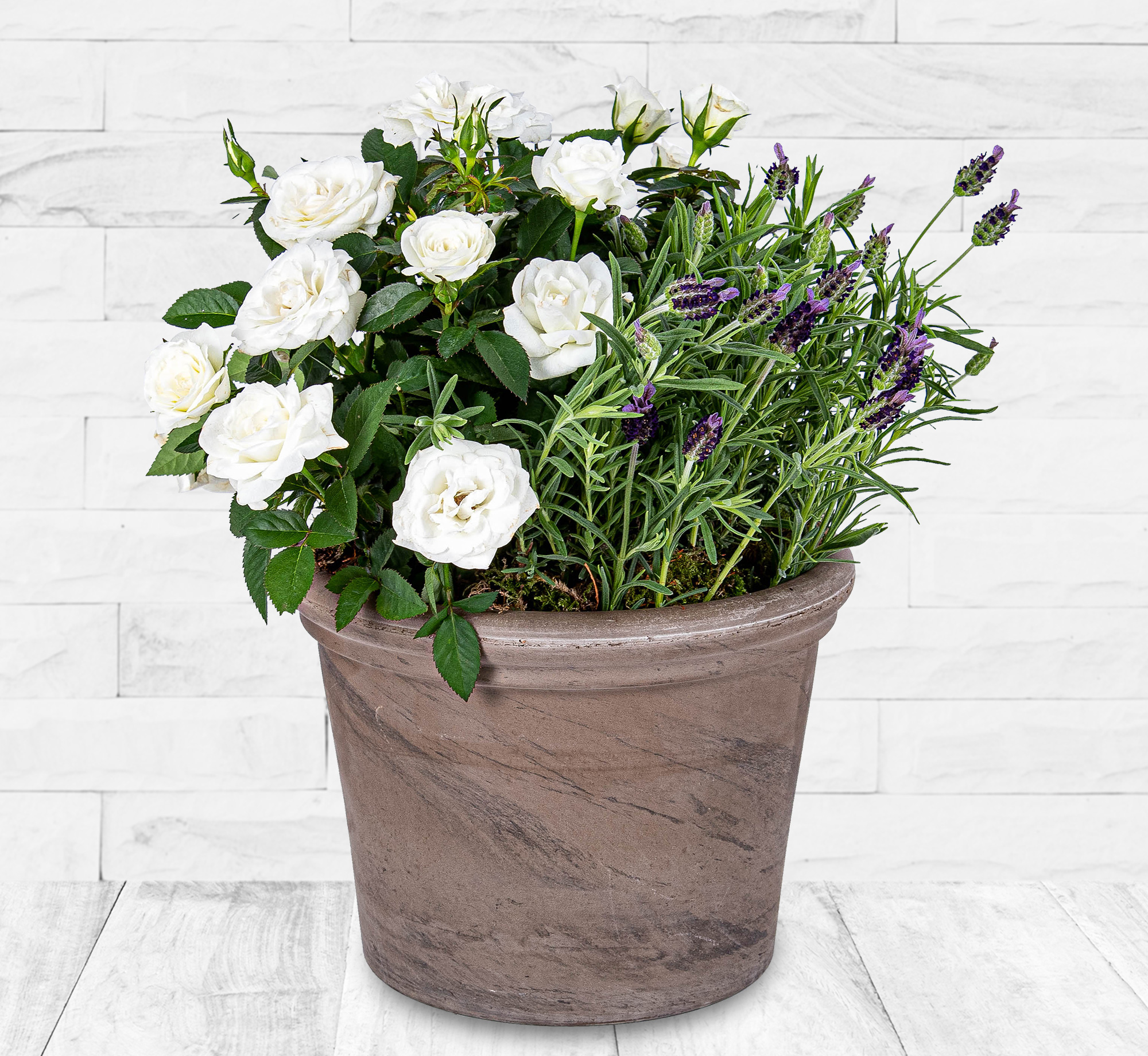 Lavender and Rose Planter