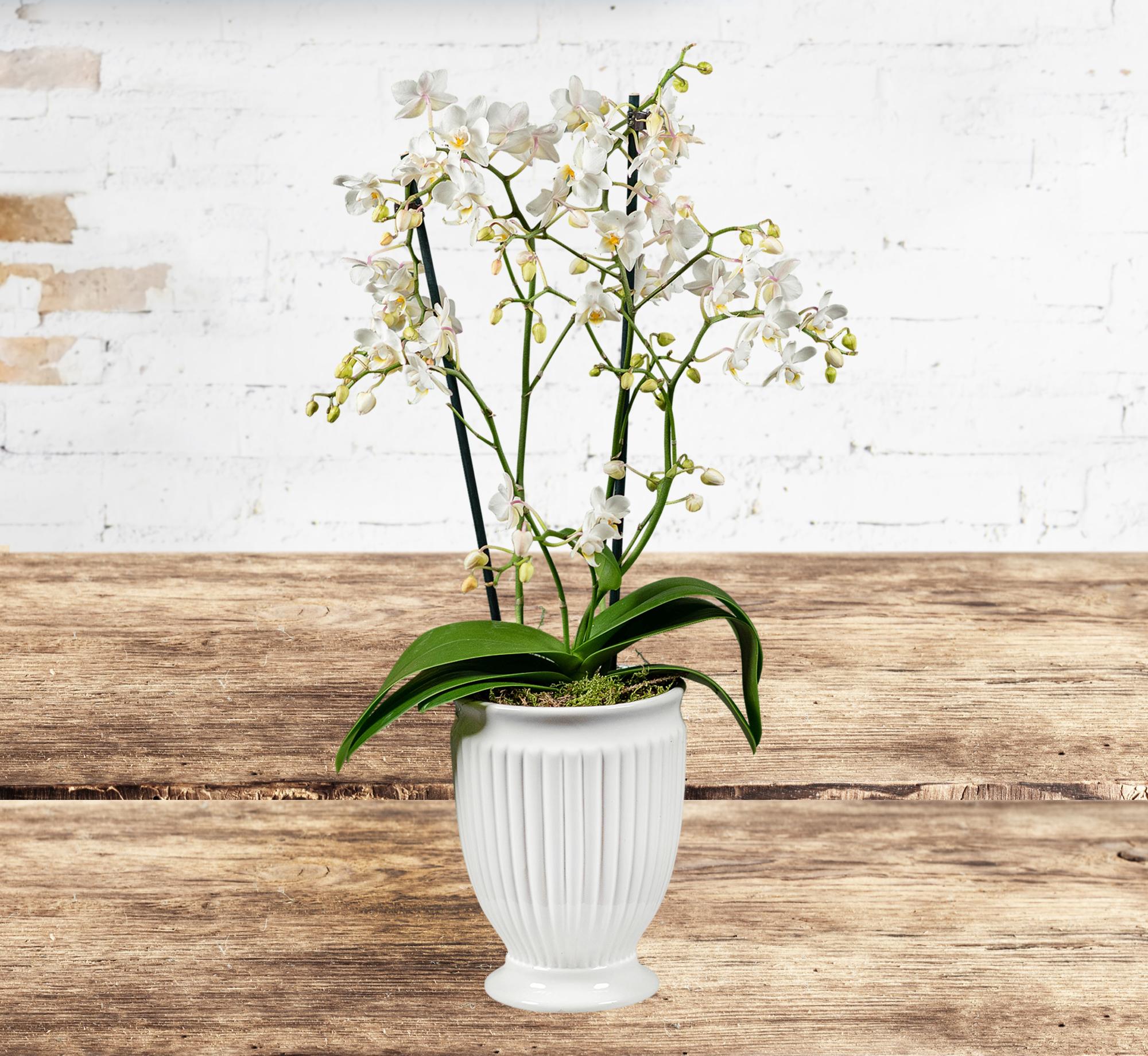 Premium Orchid Urn